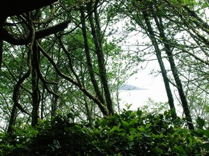 vancouver_island_foret