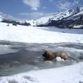 Je plonge dans les lacs gelés.