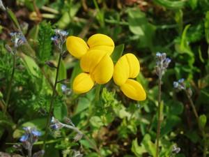ptite_fleur_jaune1