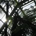 Kews Garden