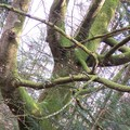 arbre féérik