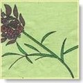lavender_gardens_2
