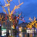 Galerie arbres