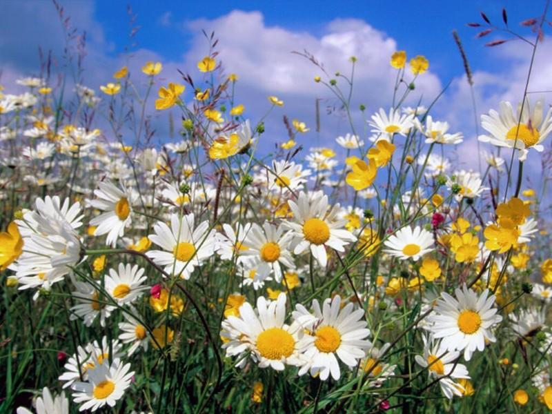 http://littlesun.canalblog.com/images/marguerite3.jpg