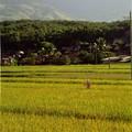 Autour de Jinghong