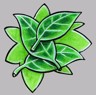 Pin dessin feuilles de cannabis zimg on pinterest - Coloriage feuille de cannabis ...
