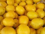 citrons_jpg