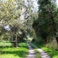 Nature en Avril