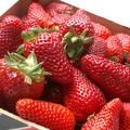Les fraises sont arrivées ...!