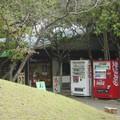 Kumamoto - Suizen-ji koen, les envahisseurs sont là