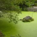 Kumamoto - Suizen-ji koen, mare paisible