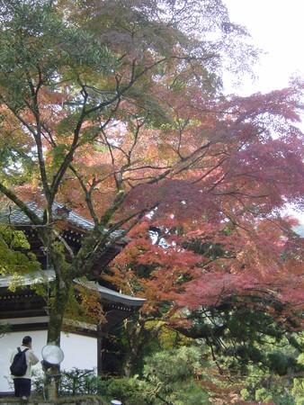 2005.11.13_automne_a_sakamoto_jingu_010