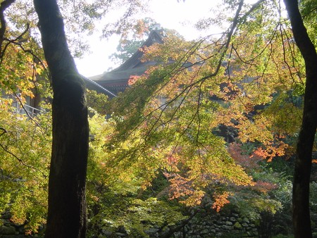 2005.11.13_automne_a_sakamoto_jingu_025