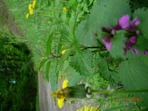 fleurjauneetviolette1