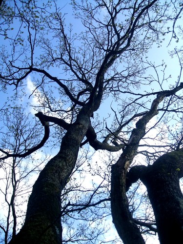 L_arbre_creux