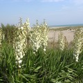 dunes plage naturiste