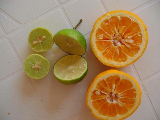 limon_agria_lima_naranja_agria