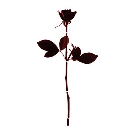 Champs de roses noires !^^ Rose