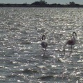Etangs et Flamants
