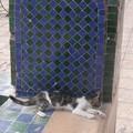 MARRAKECH / chats et cigognes