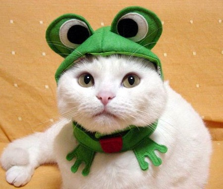 chat_grenouille