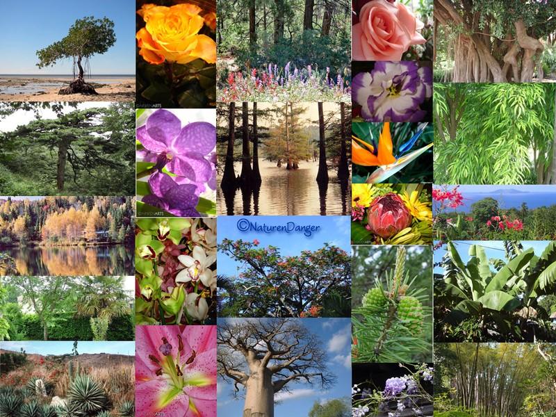 http://naturendanger.canalblog.com/images/Biodiversit__v_g_tale_copie.jpg