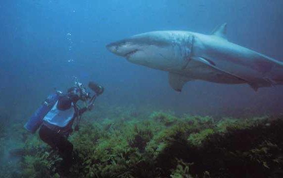 Film avec requins, une liste de films par botruk -