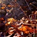 toile d'automne
