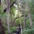 Marche dans le bush d'Ulva