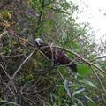 Un kaka : ils sont fous ces perroquets