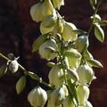 fleurs_blanches_bis