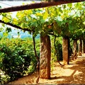Balade suos les vignes