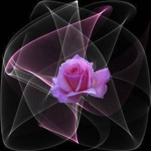 filament_de_roses__