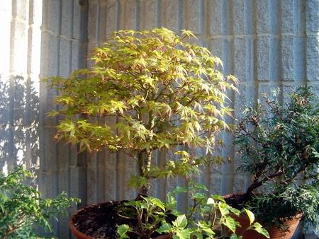 bonsai210405a00011280