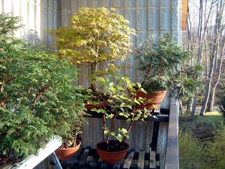 bonsai210405a00041280