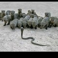pauvre serpent...