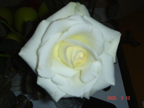 rose_copieweb