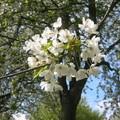 Xb- Vive le printemps