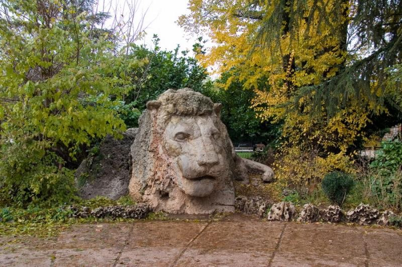 سويسرا المغرب Lion