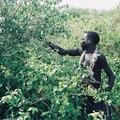 29 - Après la chasse, la cueillette