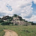 51 - Kopjes dans le Serengeti