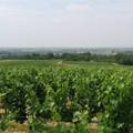 Bonnezeaux_2006_003