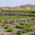 Cyclades_2004_006