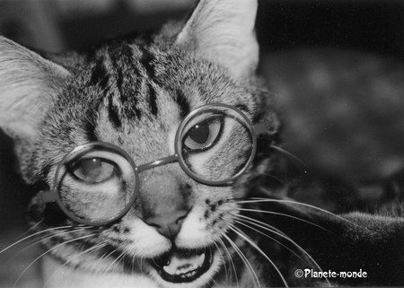 chat___lunettes2