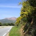 Flore Corse