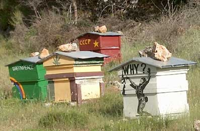 Les abeilles aussi font de la politique