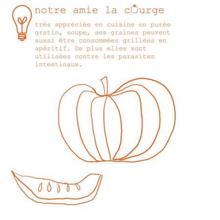 courge_copy3