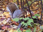 squirrel9