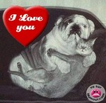 amour_chien_chat