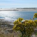Sun & Flowers - Holy Island - Août 2005